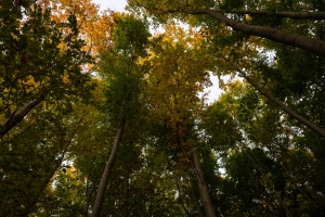 Herbstwald bei Sonnenuntergang