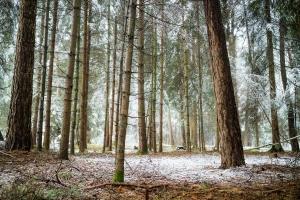 verspäteter Wintereinbruch auf der Alb