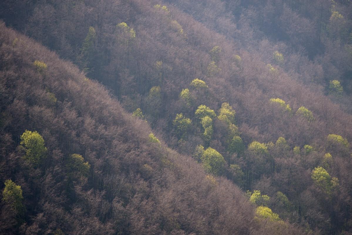 Hangwald im Frühjahr im Neidlinger Tal