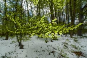 Frühlingsschnee auf der Albhochfläche