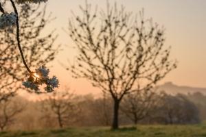 Obstbaumblüte am Albtrauf