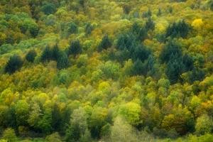 Herbstfarben im Maisental