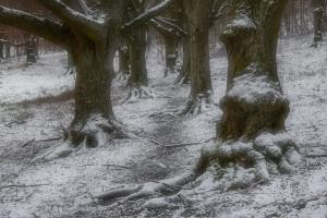 Winterformen