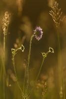 Sommerwiese auf der Albhochfläche