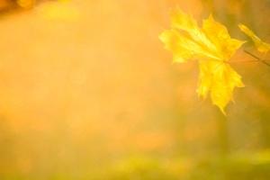 Herbstfarben am Albtrauf
