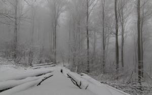 Winterwald, Bad Urach
