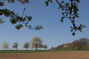Obstbäume bei Ohmden