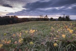 Herbstliche Heide