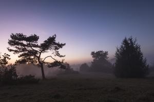 Blaue Stunde auf der Heide