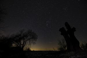 Sternenhimmel über der Schinderwasnbuche