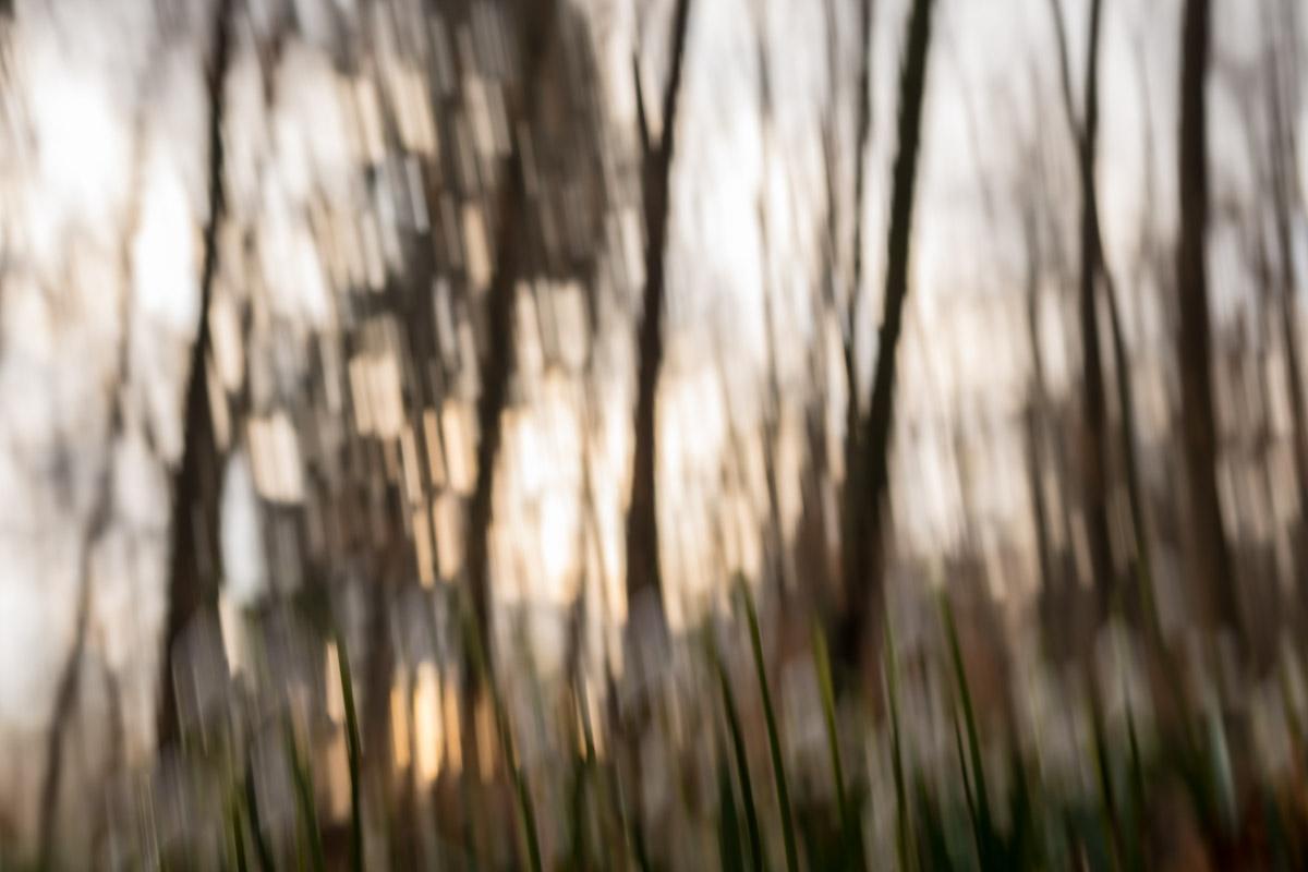 Eselsburger Tal Frühlings-Knotenblume, Leucojum vernum