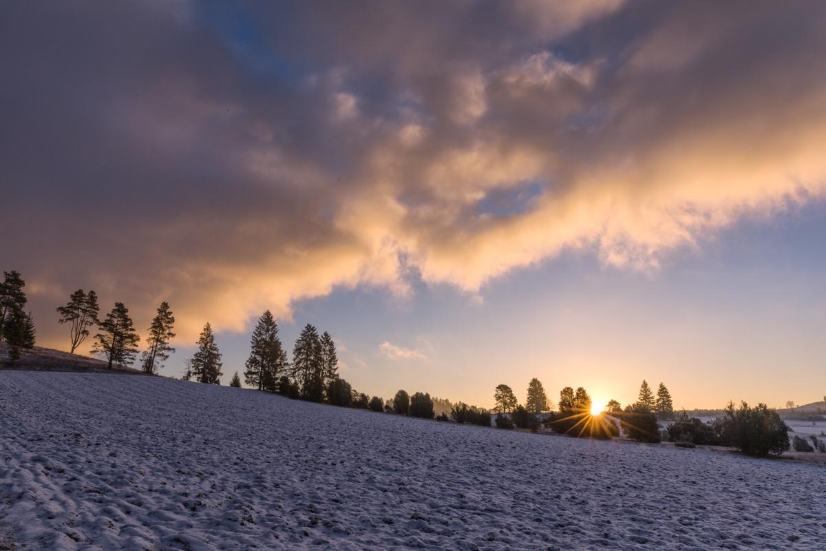 Sonnenaufgang hinter einer Baumreihe am Digelfeld