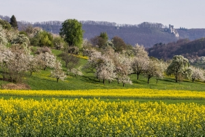 Frühling im Neidlinger Tal