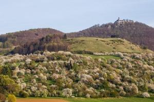 Obstbaumblüte an der Teck