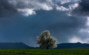 Blühender Kirschbaum bei Burg Teck