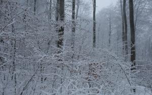 Winterlicher Wald bei Bad Urach