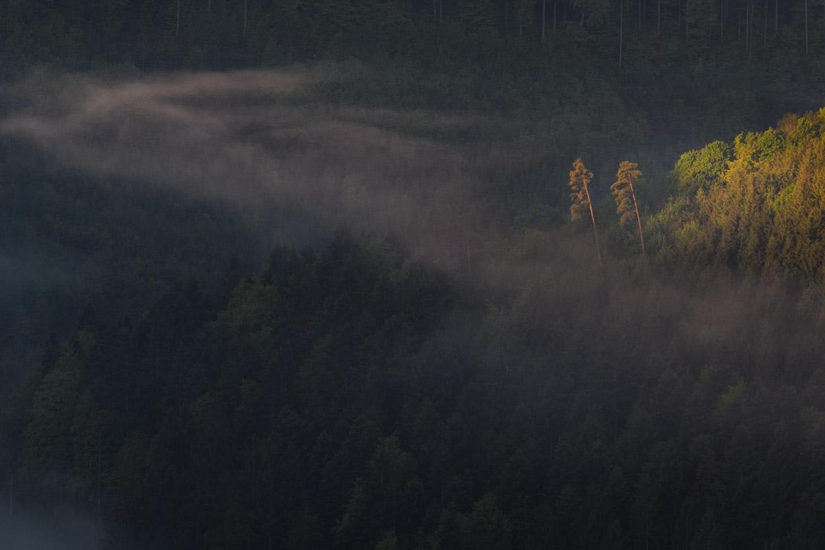 Morgenstimmung am Eichfelsen