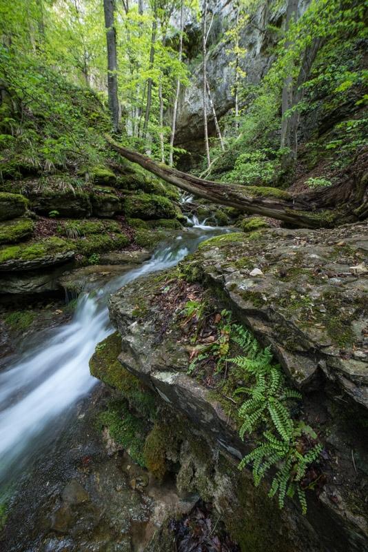 Strichfarn am Wasserfall unterhalb Falkensteiner Höhle