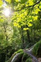Sonne am Wasserfall-Wald (Bad Urach)