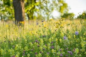 Blumenwiese bei Kirchen