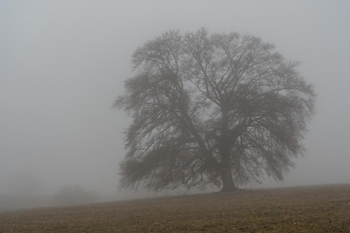 Hülenbuch im Nebel