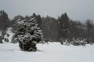 Schneeschauer über der Wacholderheide