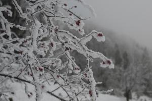 Hagebuttenstrauch in Schnee und Nebel