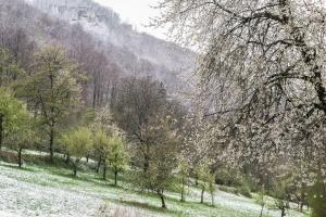 Obstwiesen Wintereinbruch_Dettingen