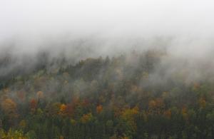 Herbst bei Gussenstadt