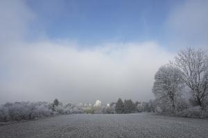 Bohlheimer Heide im Reif
