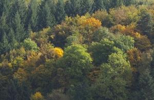 Herbst am Schmittenberg bei Heidenheim