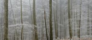 Winterwald bei Lauterach