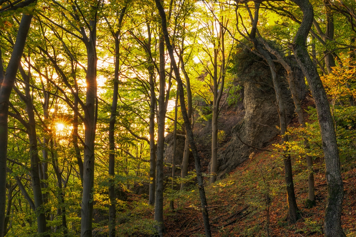 Albtrauf-Wald im Sonnenlicht