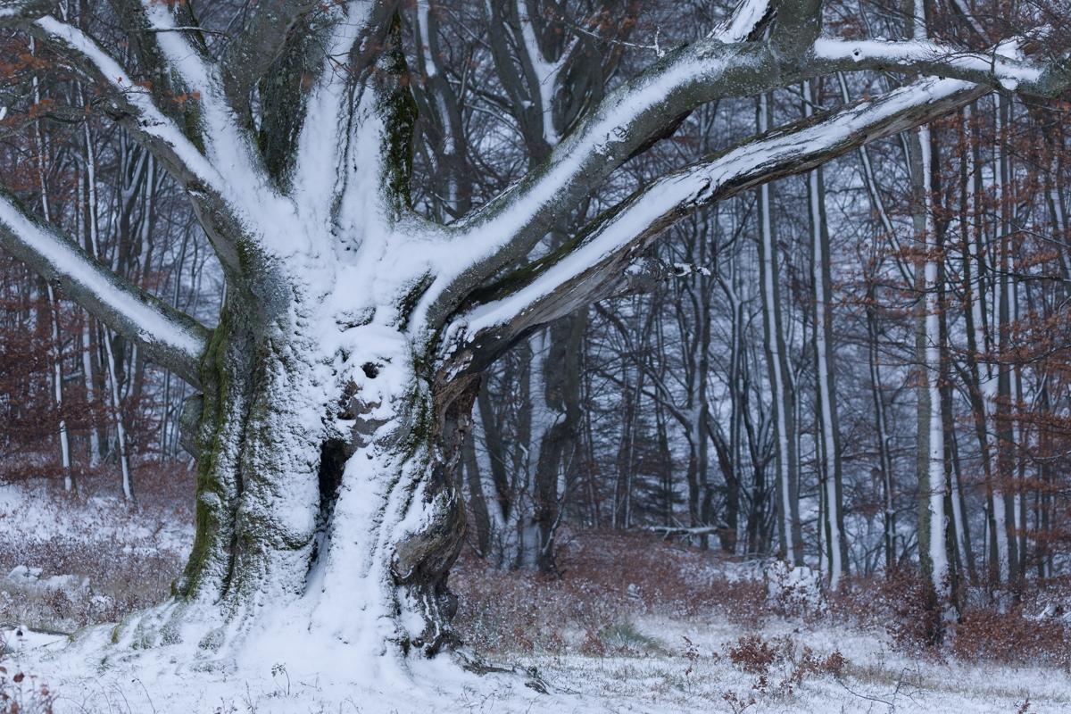 Winterlicher Charakterbaum