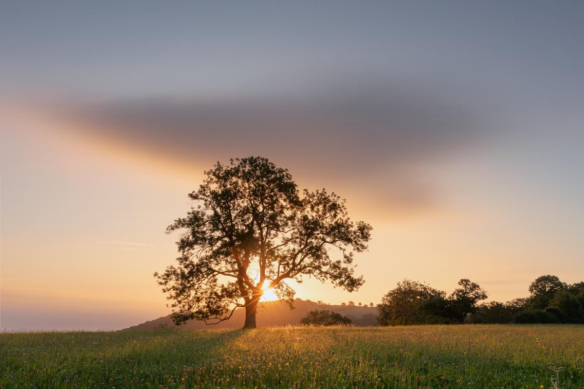 Zarte Wolke mit Baum bei Sonnenaufgang
