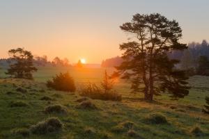 Sonnenaufgang auf der Wacholderheide bei Truchtelfingen