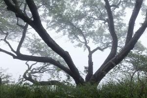 Baum am Albhang auf dem Plettenberg