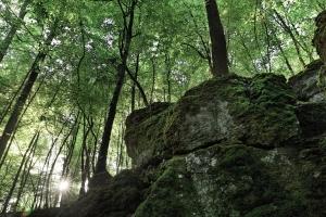 Sonnenaufgang im Wald bei Bleichstetten
