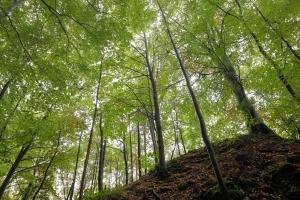 Bäume im Gegenlicht am Albtrauf