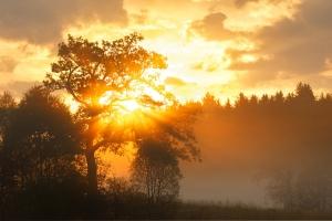 Sonnenaufgang am Irndorfer Hardt