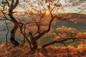 Herbstbaum am Rand der Hülenbuchwiesen