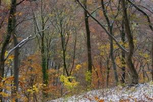 Herbstlicher Albhang