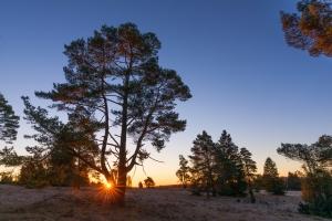 Sonnenaufgang auf der Schäfhalde