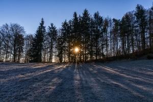 Sonnenstrahlen durch eine Baumreihe an der Hangkante