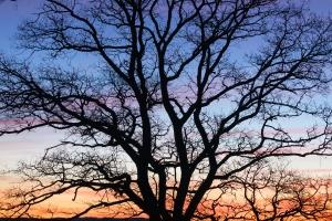 Baumkrone bei Tagesanbruch