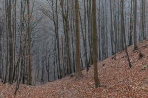 Laubloser Wald am Roßberg