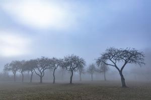 Streuobst-Baumreihe am beim Hochholz