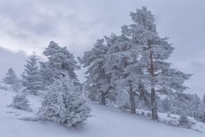 Winterbäume im Hersfeld