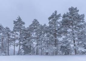 Baumreihe an einer Albkante bei Burgfelden