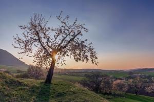 Sonnenuntergang über den Streuobstwiesen des Alb-Vorlandes